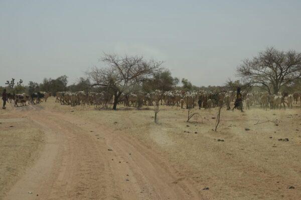 Afrika 2019-2020 1995