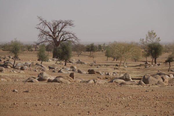 Afrika 2019-2020 2006