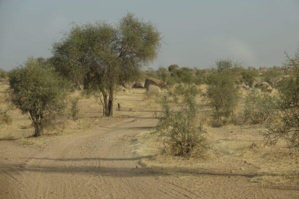Afrika 2019-2020 2012