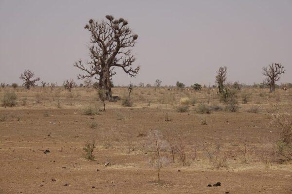 Afrika 2019-2020 3059